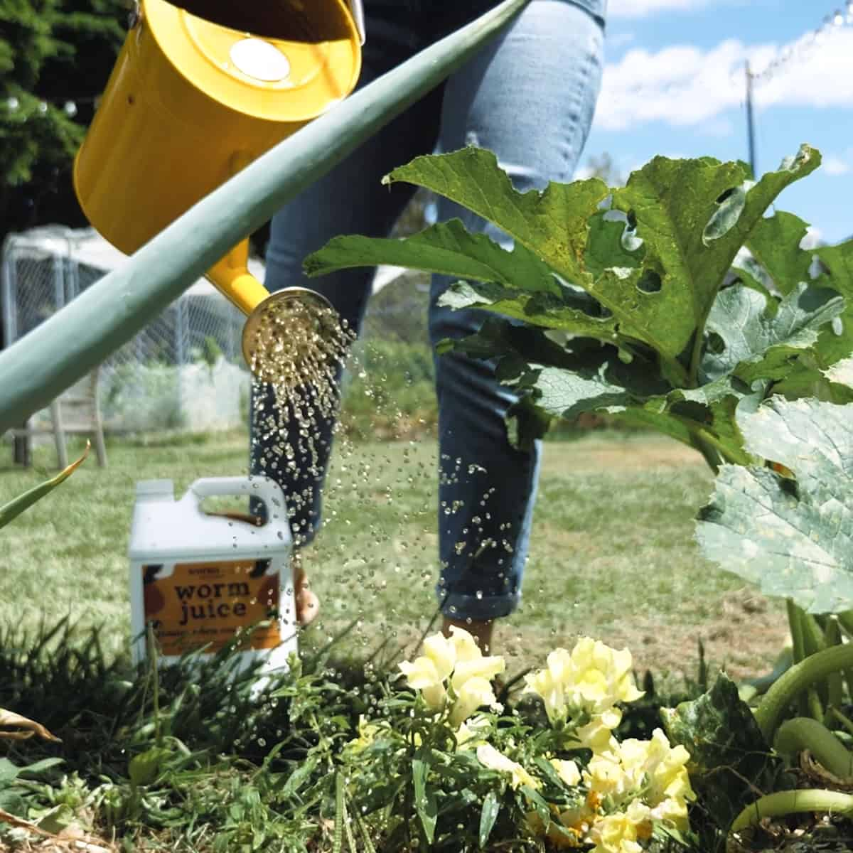 Worm Juice Applying To Garden2