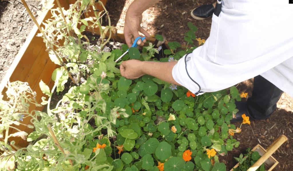 JW Marriott Garden - Herbs