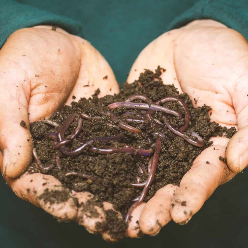 Getting Started: How many worms do I need?
