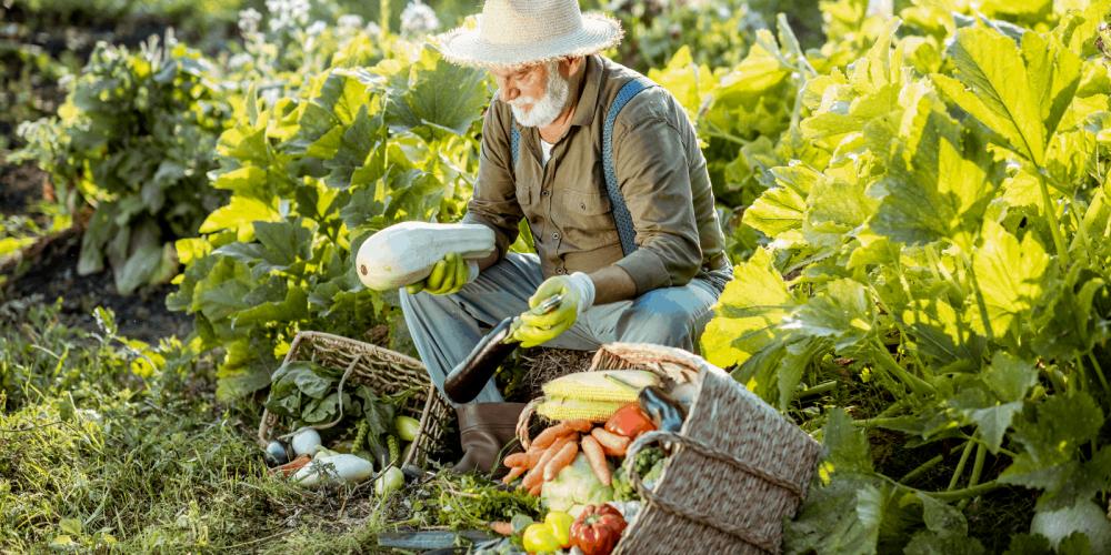 Vermicomposting Vs Composting Man In Garden