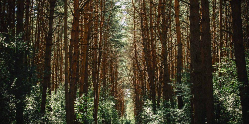 Trees Paper